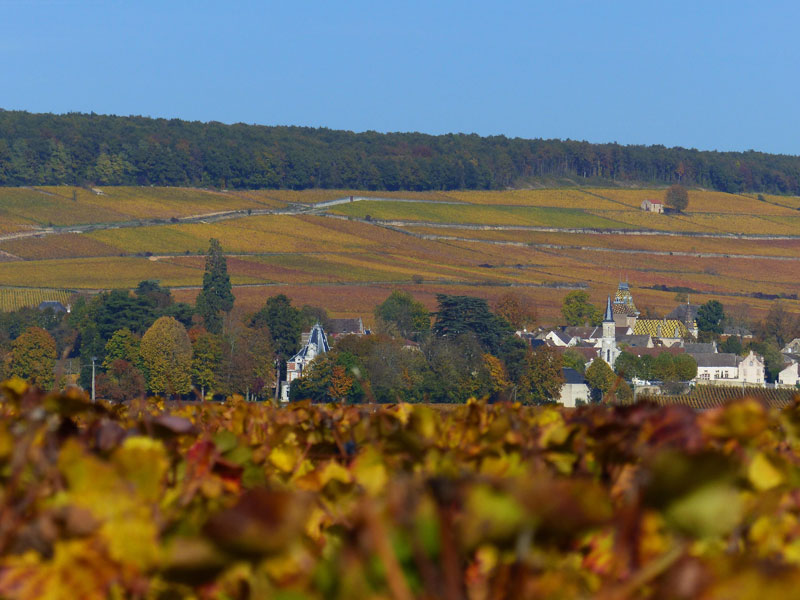 Aloxe Corton en automne